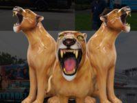roaring cats-min
